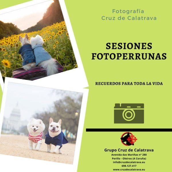 Fotos profesionales para tu mascota